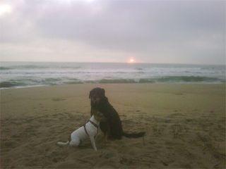 Poochie-sunrise